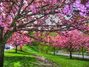 Картинка Франция Весенние Цветущие деревья Ветвь Lorraine Природа