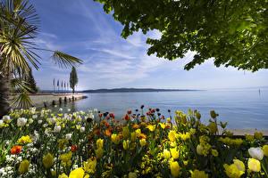 Картинки Германия Берег Тюльпаны Залив Mainau Island