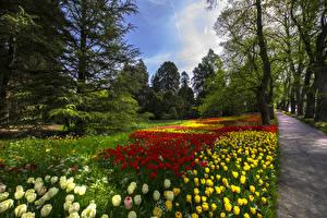Обои Германия Парки Весна Тюльпаны Деревья Mainau Island