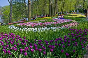 Фотография Нидерланды Парки Тюльпаны Дизайн Keukenhof