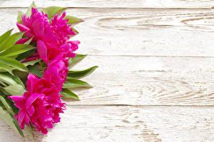 Обои Пионы Доски Розовый Цветы