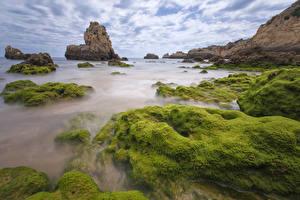 Картинка Португалия Побережье Мох Скала Praia do Alemao