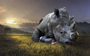 Картинки Носороги Печаль Трава Животные