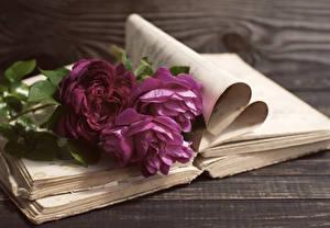 Картинки Роза Бордовая Книги цветок