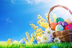 Картинки Небо Пасха Яйца Корзинка Трава Цветы