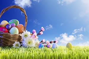 Фотография Небо Пасха Корзина Трава Яйца Цветы