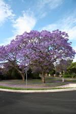Фотография Весенние Цветущие деревья