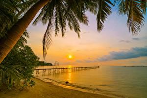 Картинка Рассвет и закат Берег Пальм Пляже Природа