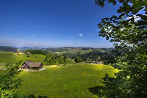Картинка Швейцария Поля Дома Холмы Ветки St. Gallen Природа