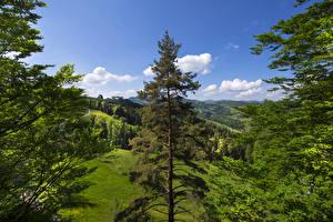 Фотография Швейцария Леса Луга Холмы Ель St. Gallen Природа