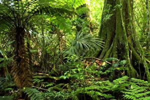 Фото Тропический Леса Мох Jungle