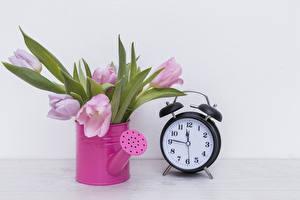 Картинки Тюльпаны Часы Будильник Цветы
