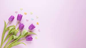 Фотографии Тюльпаны Цветной фон Серце цветок