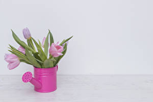 Обои Тюльпаны Розовый Серый фон