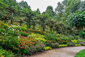 Фотография Штаты Сады Бегония Дизайн Gibbs Gardens Природа