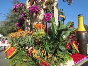 Картинки Штаты Парки Орхидеи Калифорния Дизайн Pasadena Природа