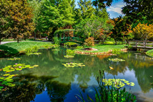 Фотографии Штаты Парки Пруд Мосты Деревья Gibbs Gardens Природа