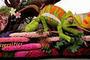 Фотографии Штаты Розы Герберы Калифорния Дизайн Хамелеон Pasadena Цветы
