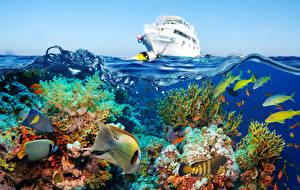 Обои Подводный мир Рыбы Кораллы