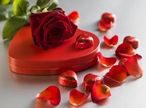 Обои День святого Валентина Розы Сердце Лепестки Цветы картинки
