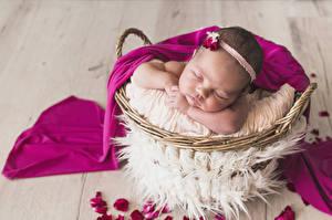 Фотографии Корзинка Младенцы Спят Дети