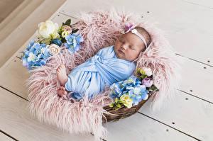 Фотография Доски Корзина Грудной ребёнок Спящий Ребёнок