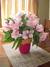 Картинки Альстрёмерия Ваза Розовый Цветы