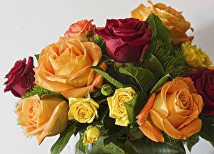 Фотография Букеты Розы Вблизи Цветы