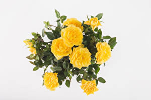 Фото Букеты Розы Белый фон Желтый Цветы