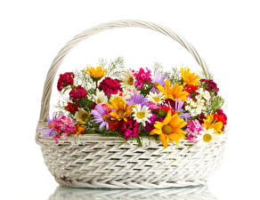 Картинка Ромашки Гвоздики Белый фон Корзинка Цветы