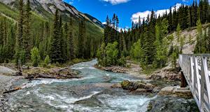 Фотография Канада Гора Леса Река Парки Мосты Пейзаж Банф Ели