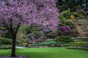 Обои Канада Парки Цветущие деревья Газон Кусты Дизайн Butchart Gardens Природа