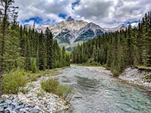 Картинки Канада Парки Горы Леса Речка Камни Банф Ель Природа