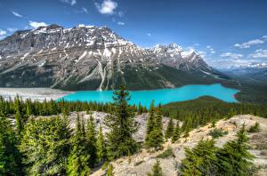 Фотографии Канада Парки Горы Озеро Пейзаж Банф Peyto Lake Природа