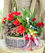 Картинки Георгины Колеус Орхидеи Альстрёмерия Корзина Цветы
