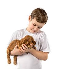 Фото Собаки Мальчики Щенок Ребёнок