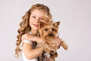 Фотография Собаки Цветной фон Девочки Йоркширский терьер Смотрят Руки ребёнок Животные