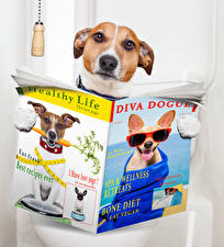 Картинка Собаки Креатив Туалет Джек-рассел-терьер Журнал Забавные