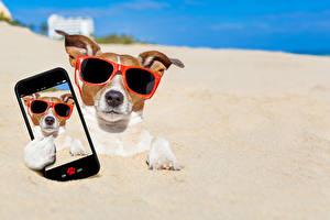Фотографии Собаки Песок Джек-рассел-терьер Очки Смартфон Селфи Забавные Животные