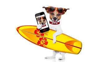 Картинка Собаки Серфинг Белый фон Джек-рассел-терьер Очки Смартфон Селфи Животные