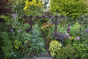 Картинки Англия Сады Дизайн Кусты Walsall Garden