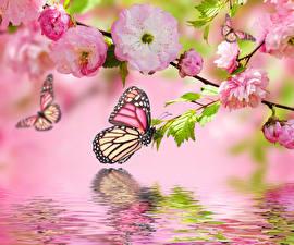 Картинки Цветущие деревья Бабочки Вода Ветвь Цветы