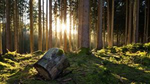 Картинки Леса Деревья Пень Природа