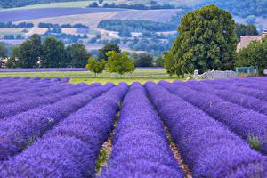 Обои Франция Поля Лаванда Provence Природа