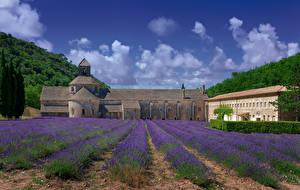 Фотография Франция Храмы Монастырь Поля Лаванда Senanque Abbey Природа