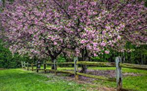 Фотографии Сады Цветущие деревья HDRI Забор Трава Природа