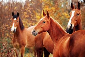 Картинки Лошади Смотрит Животные