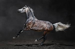 Картинки Лошади Сбоку Животные