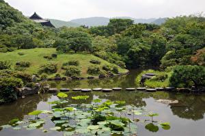 Фотография Япония Парки Пруд Камень Дизайн Кусты Nara Park Природа