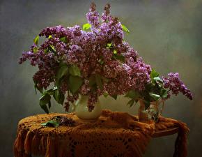 Картинки Сирень Стол Ваза Цветы